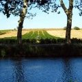 Vineyards of Vias and the Canal du Midi